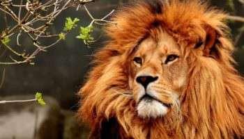 Тест: В прошлом вы какое животное?